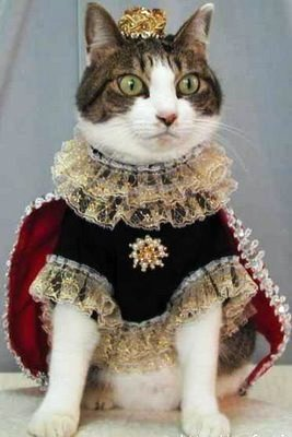 funny-cat-picture-cat-king